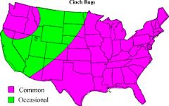 cinch bug map