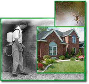 technician spraying perimeter pest control