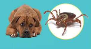 dog looking at tick