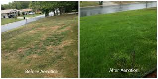 core aeration and over seeding before and after