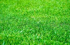 lime on grass